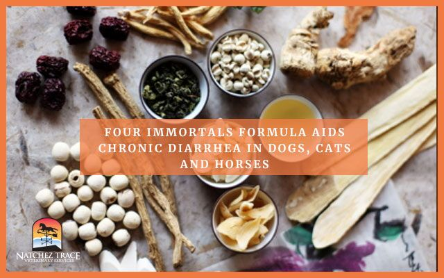 Image for Four Immortals Formula Aids Chronic Diarrhea in Dogs, Cats and Horses