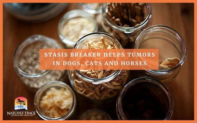 Image for Stasis Breaker Helps With Tumors in Dogs, Cats and Horses