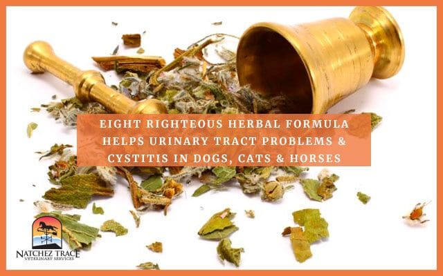 Image for Eight Righteous Herbal Formula Helps Urinary Tract Problems & Cystitis