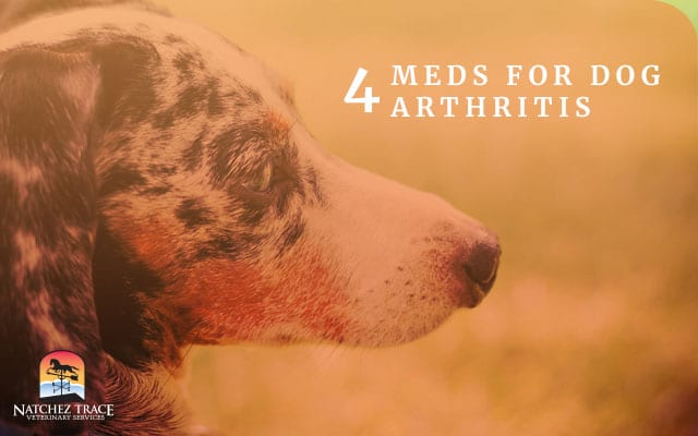 Image for 4 Meds That Wipe Out Dog Arthritis Pain