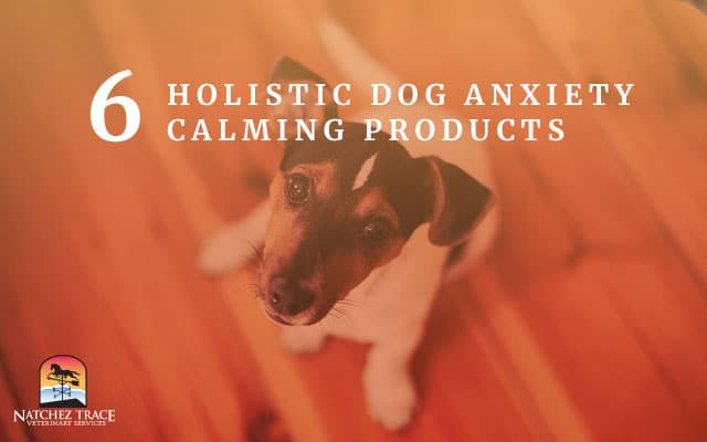 Image for 6 Holistic Dog Anxiety Calming Products