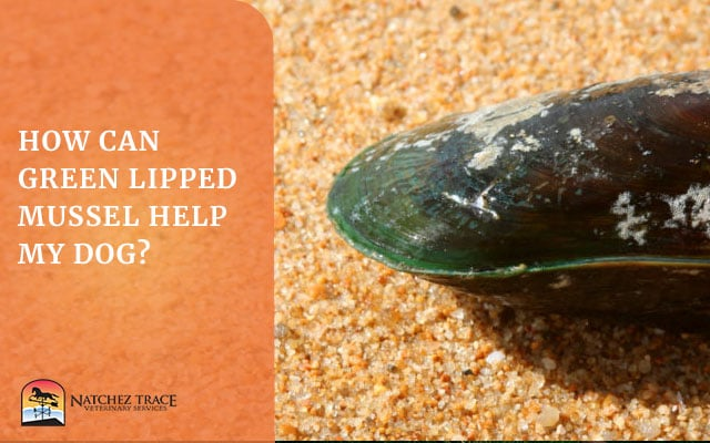 Picture of green lipped mussel