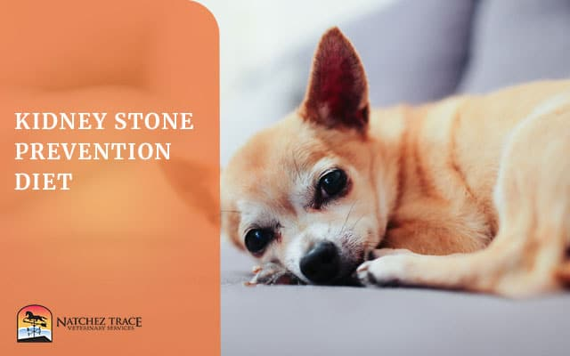 Image for Protect Your Dog from Kidney Stones with the Kidney Stone Prevention Diet