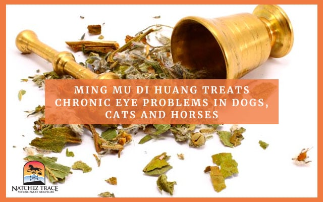 Mixture of multiple herbs for pet glaucoma.
