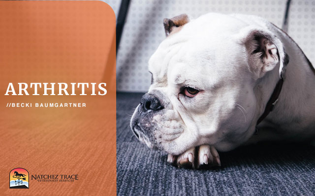 Dog's Arthritis Treatment