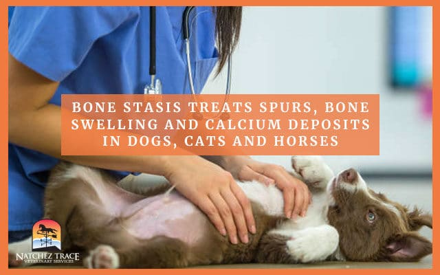 Dog being examined for bone statis treatment