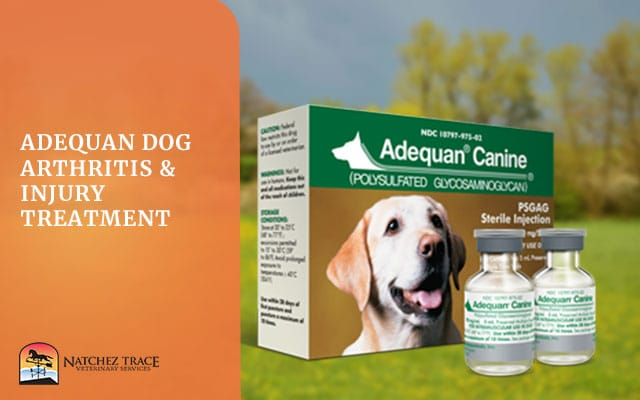 Image for Adequan Dog Arthritis & Injury Treatment