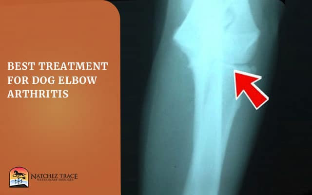 Image for Best Treatment for Dog Elbow Arthritis