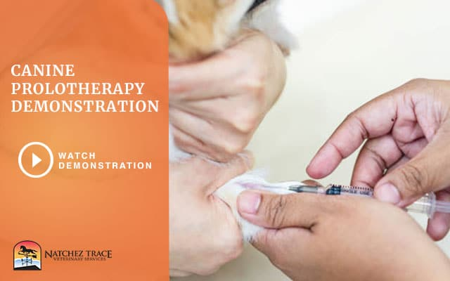 A Video Of Canine Prolotherapy Demontration In Pet