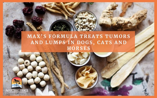 treating tumors and lumps in dogs cats horses
