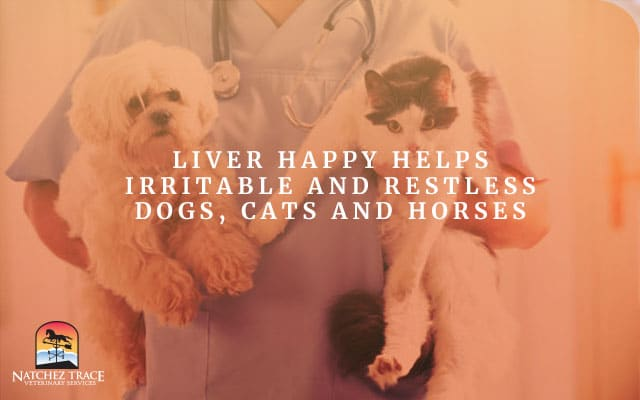 Picture of Dog and Cat That A Happy Liver