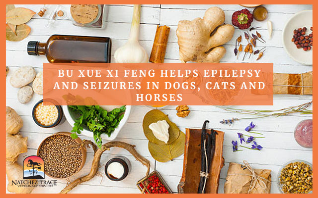 A Picture of Some Herbs For Epilepsy and Seizures