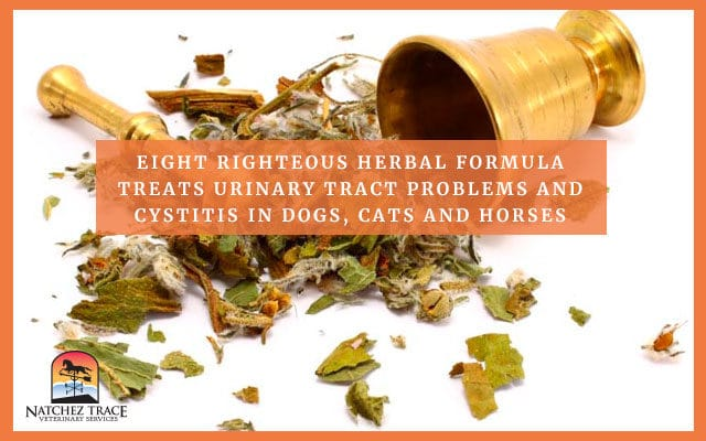 Herbal Formula That Can Treat Urinary Problem In Pets