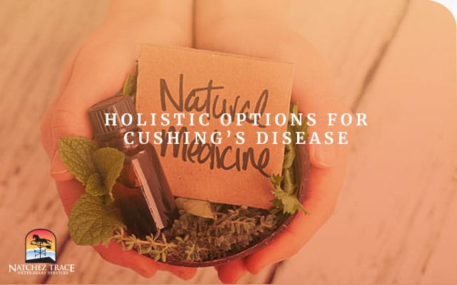 Image for Holistic Options for Cushing's Disease
