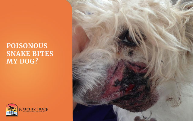 A Picture Of Dog With Wound In His Face