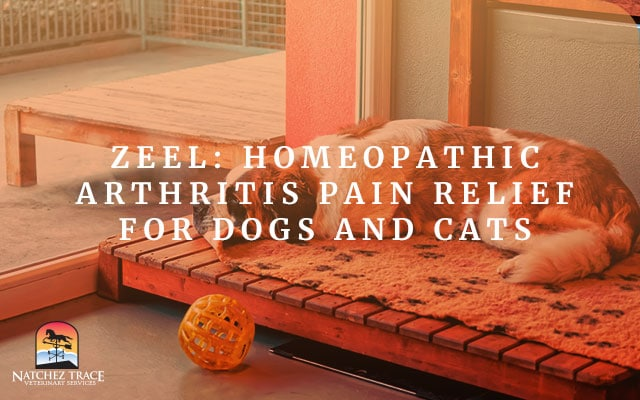 Image for Zeel: Homeopathic Arthritis Pain Relief for Dogs and Cats