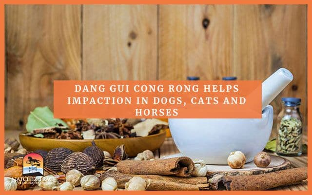 Dang Gui Cong Rong Helps Impaction in Dogs, Cats and Horses