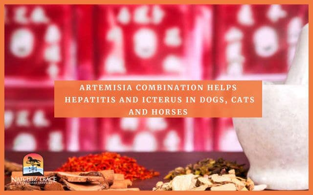 Image for Artemisia Combination Treats Hepatitis and Icterus in Dogs, Cats and Horses