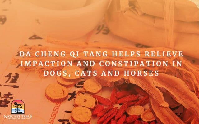 Image for Da Cheng Qi Tang Relieves Impaction and Constipation in Dogs, Cats and Horses