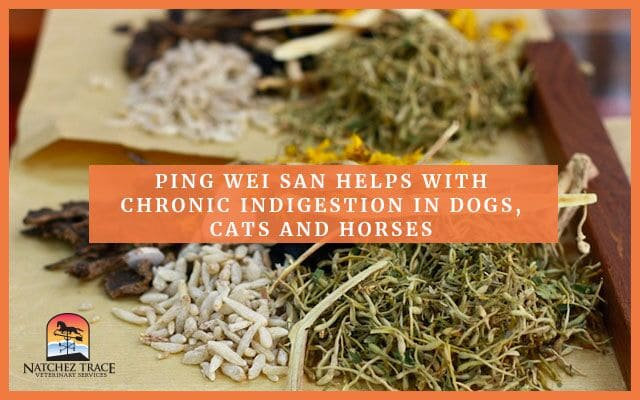 Image for Ping Wei San Helps Chronic Indigestion in Dogs, Cats and Horses