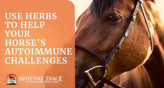 How to Help Horse Autoimmune Disorders With Herbs