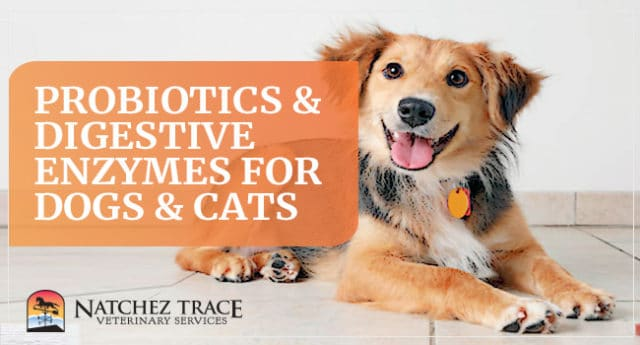 Image for What's the Best Probiotic Supplement for My Pets?