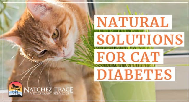 Image for Looking for an Herbal Formulation for Diabetes in Cats?