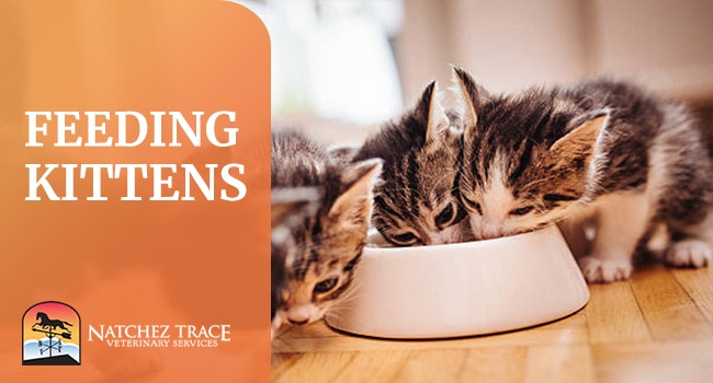 Image for Important Things To Keep In Mind When Feeding Kittens