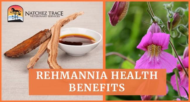 Image for Rehmannia Health Benefits: Strengthens Kidneys, Adrenals, Blood