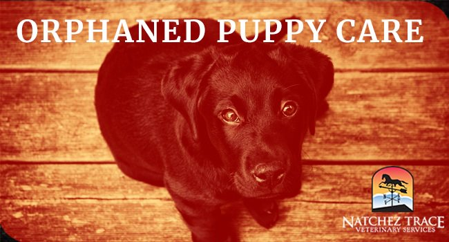 Image for Orphaned Puppy Care