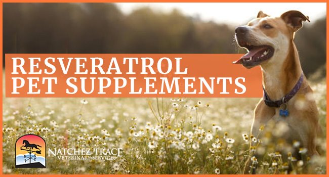 Image for Resveratrol Pet Supplements