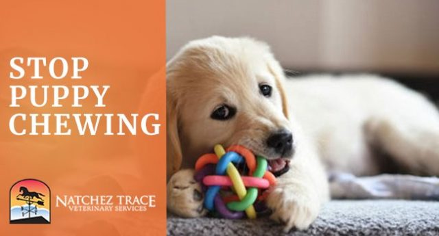 Image for How To Stop Puppy Chewing Problems